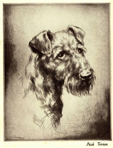 1930s Antique IRISH TERRIER Dog Print Vintage Irish Terrier Illustration 3404-C