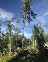Expert Tree removal now, call 587-377-8225.