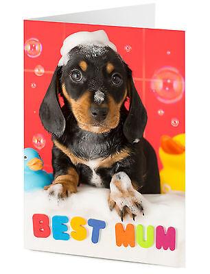 BEST MUM Dachshund puppy dog message Birthday or Mother's day