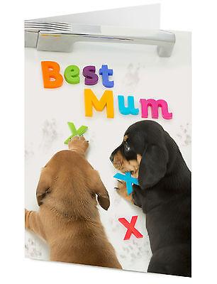 'BEST MUM' Dachshund puppy dogs create message on fridge Mother's Birthday
