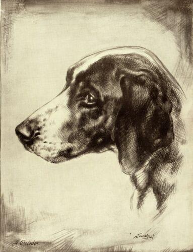 1930s Antique Pointer Dog Print Lovely Head Pointer Dog Art Print 3618-B