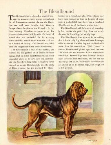 1942 Antique BLOODHOUND Dog Art Print Vintage Edwin Megargee Print 3867c