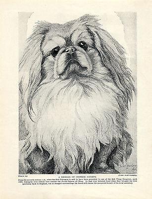 PEKINGESE HEAD STUDY CHARMING IMAGE OLD 1934 PRINT by NINA SCOTT LANGLEY