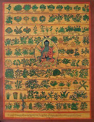 Thangka Medizin Buddha ~ Tibetische Heilpflanzen ~ sehr fein (1245)