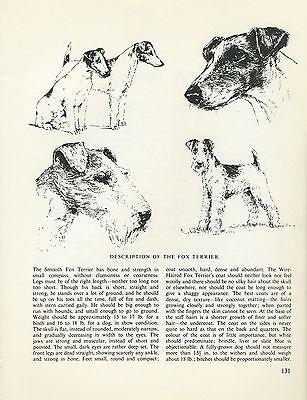 FOX TERRIER VINTAGE 1963 DOG PRINT SKETCH PAGE ARTIST BRIDGET OLERENSHAW