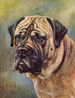 MASTIFF HEAD STUDY LOVELY OLD DOG COLOUR ART PRINT FROM 1934 BY F. T. DAWS
