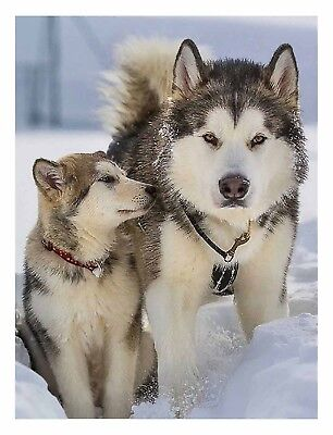 Malamute and Cub in Snow - 3D Lenticular Poster  -12 x16 Print