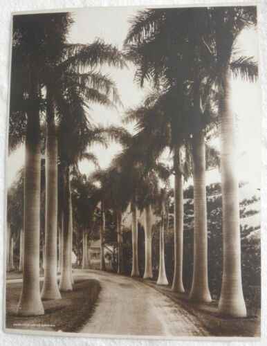 antique Honolulu, Hawaii  Royal Ave. by R.J. Baker photo 13X 10 inches