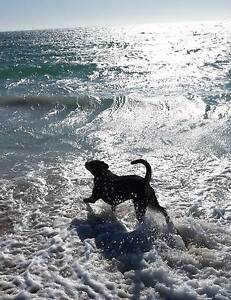 Lani's Pet sitting & Dog walking/training services Stirling Stirling Area Preview