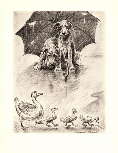 1946 Antique IRISH TERRIER Print Morgan Dennis Dog and Ducks Art 3942r