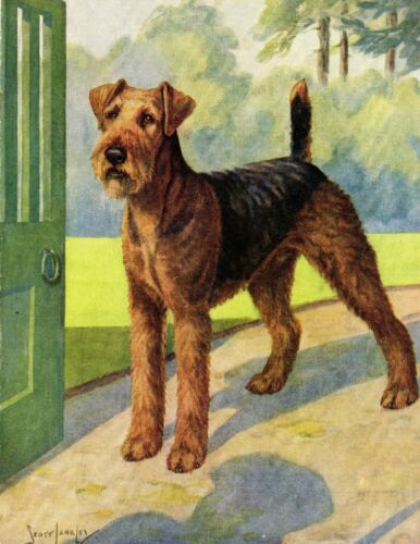 1930s Antique AIREDALE TERRIER Dog Print Nina Scott Langley Art  3947w