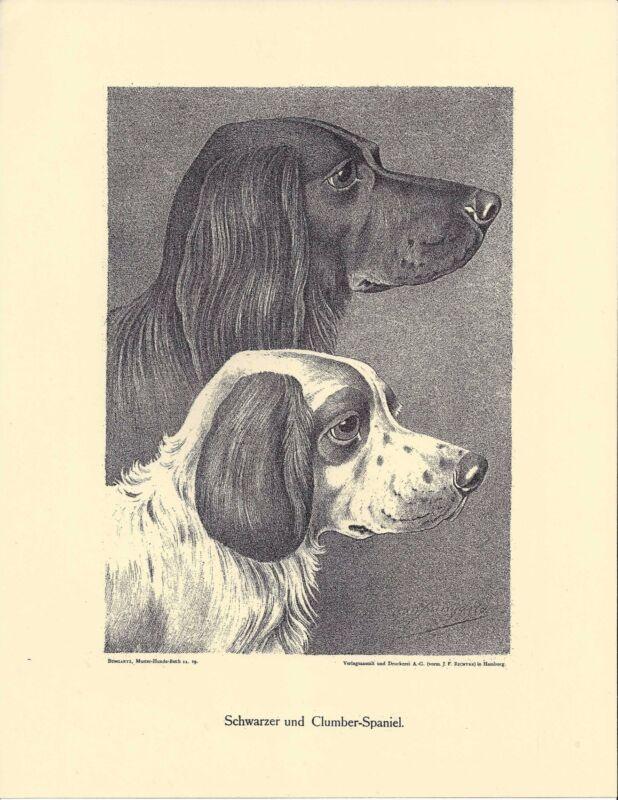 1890 Jean Bungartz Dog Art Head Print Reproduction CLUMBER & BLACK FIELD SPANIEL