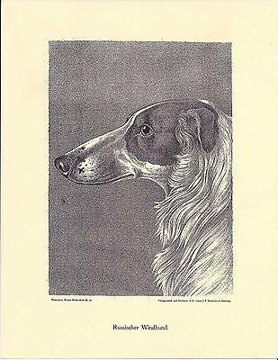 1890 Jean Bungartz Dog Art Study Print Reproduction BORZOI RUSSIAN WOLFHOUND