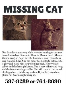 MISSING CAT IN MOUNT CARSON AREA OF MOUNT PEARL