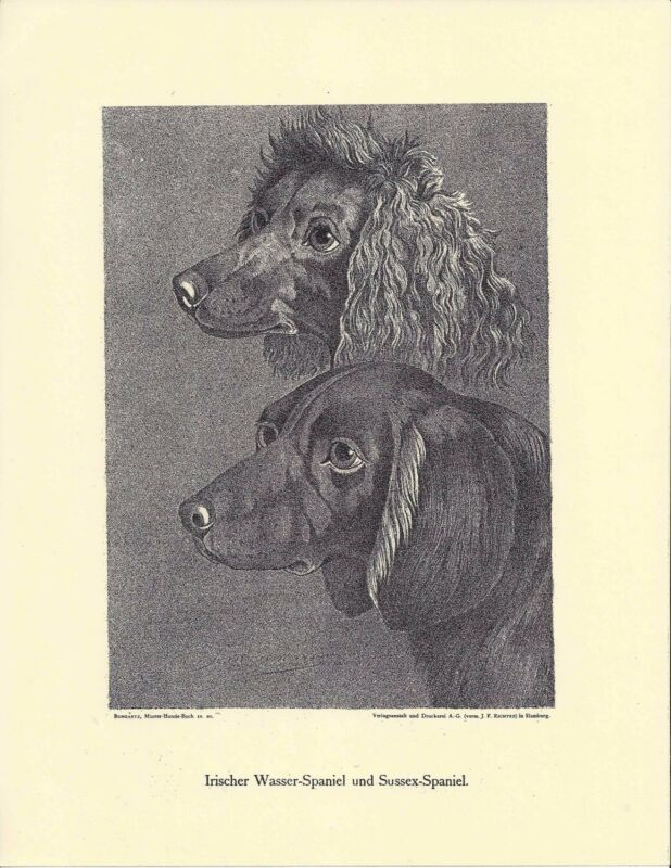 1890 Jean Bungartz Dog Art Head Print Reproduction IRISH WATER & SUSSEX SPANIEL