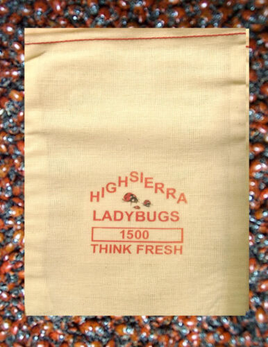 1500 Premium Fresh Live Ladybugs  Think Fresh!!  In Stock Now  Fast Shipping.