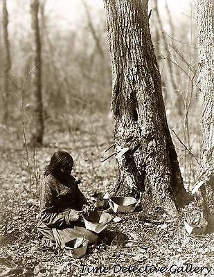 Native American Ojibwa Woman Tapping Sugar Maple Tree 1908 Historic Photo Print