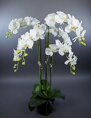 Orchidee 90x60cm weiß GA Kunstpflanzen künstliche Blumen Orchideen Kunstblumen