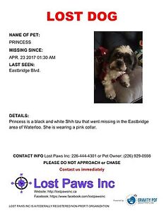 Missing Shih Tzu in Eastbridge