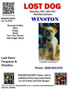 ****found****Lost Dog - help bring Winston home!!
