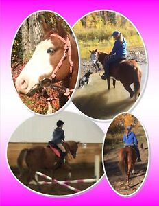 2009 14.3hh paint trail mare