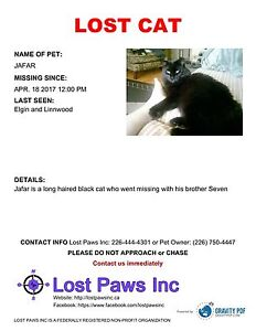 2 missing black cats