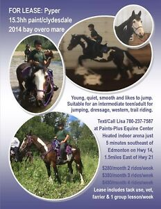 4 horses for lease at Paints-Plus Equine Center 5 mins SE of Edm