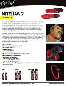 Nite Dawg Led light up collar Brighton Holdfast Bay Preview