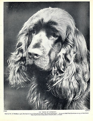 SUSSEX SPANIEL HEAD STUDY NAMED CHAMPION DOG OLD 1934 PRINT