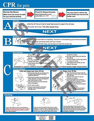 Pet Cpr   First Aid Chart