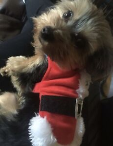 X small Santa suit for a little dog
