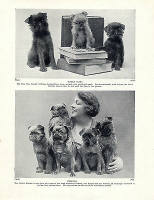 BRUSSELS GRIFFON PUPPIES ALSO LADY AND HER OLD ORIGINAL DOG PRINT PAGE FROM 1934
