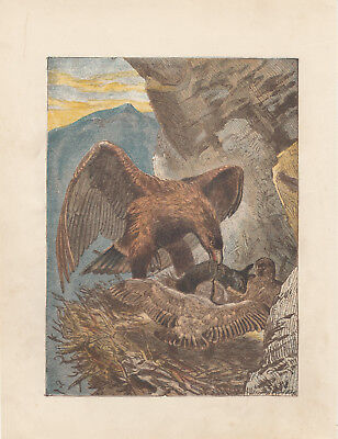 GOLDEN EAGLE BIRD FEEDING BABY EAGLETS IN NEST ANTIQUE ART PRINT LITHOGRAPH