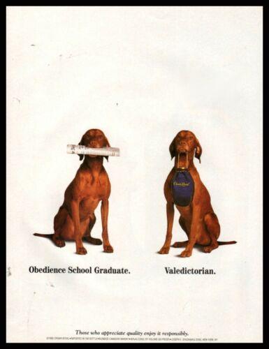 Nov. 1996 VIZSLA Dog Obedience School Graduate Crown Royal Photo AD