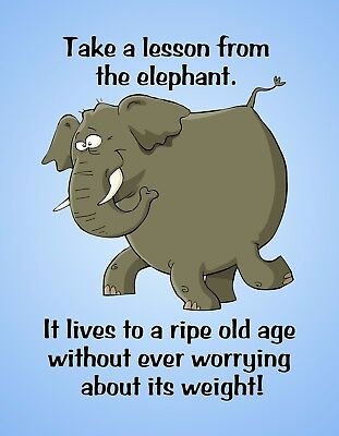 METAL REFRIGERATOR MAGNET Elephant Lesson Old Never Worry Weight Friend Humor  for sale  Shipping to India