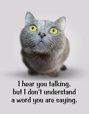 Gray Kitten (METAL REFRIGERATOR MAGNET Gray Kitten Hear Talking Don't Understand Cat)