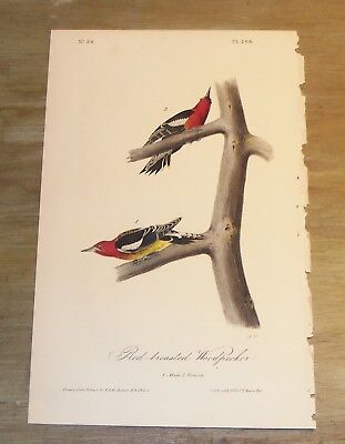 Birds of America.  Audubon. Red-breasted Woodpecker. 1st ed.