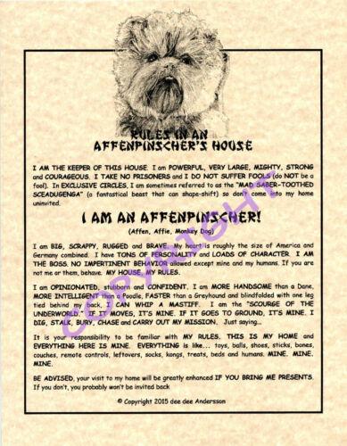 Rules In An Affenpinscher