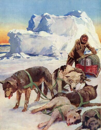 1930s Antique Sled Dog Print Dog Sledding Eskimo Dogs G Dixon Art 3459-H