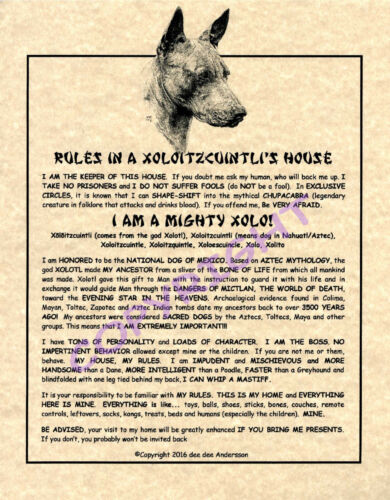 Rules In A Xoloitzcuintli