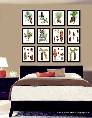 Rustic Living Room Decor Pine Tree Pine cone art prints setof 12 Wall Decor