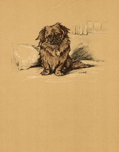 1937 Antique Pekingese Art Print Lucy Dawson Vintage Pekingese Dog Art 3581-N