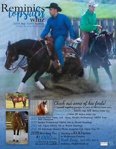 Reminicstopsailnwhiz 2008 AQHA stallion at stud
