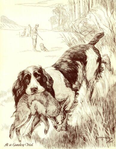 1930s Antique Springer Spaniel Print Gundog Trial Nina Scott Langley Art 3518-K