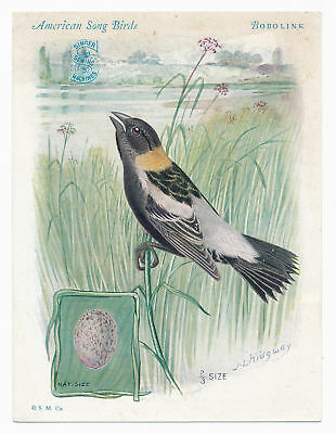 Bobolink - American Song Birds - Singer Sewing Machine - Vintage Trade Card