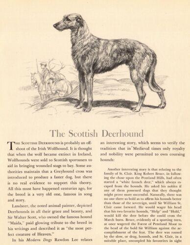 1942 Antique DEERHOUND Art Print Edwin Megargee Scottish Deerhound Print 3830g