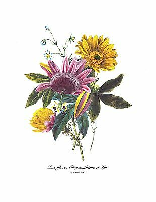 1991 Vintage REDOUTE BOUQUET #42 PASSION FLOWER, CHRYSANTHEMUM Color Lithograph