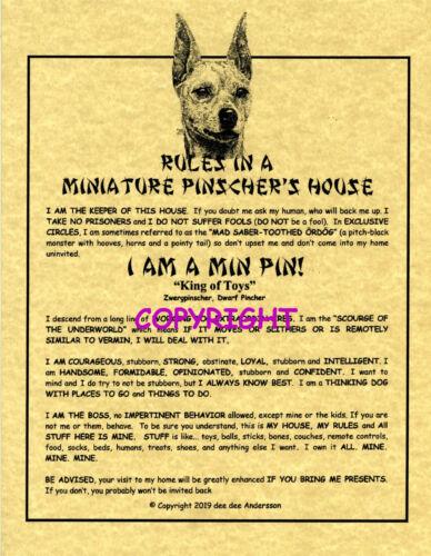 Rules In A Miniature Pinscher
