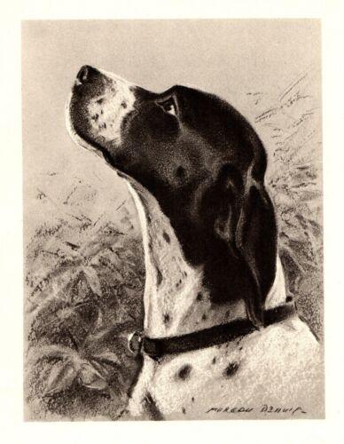 1946 Antique POINTER Dog Print Morgan Dennis Dog Art Pointer Art 3944t