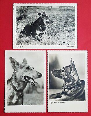 3 x Foto AK HUNDE um 1940 Schäferhund Hund   ( 30886